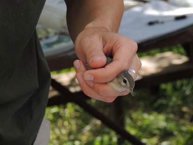 2012 Teton Bird-in-hand