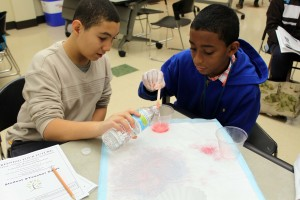 STEM Careers DNA Extraction