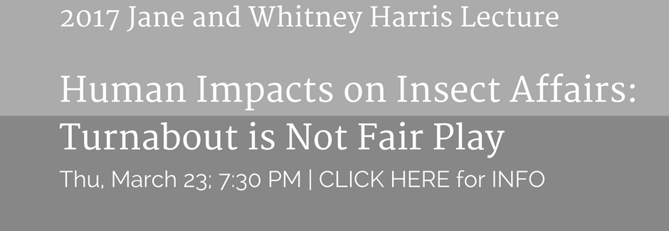 Human-Impacts-on-Insect-Affairs_-Turnabout-is-Not-Fair-Play-2