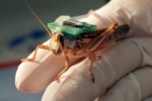 Locust BioSensor